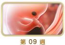 http://www.abbottmama.com.hk/images/dummy_fwd_09_s.jpg