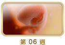 https://www.abbottmama.com.hk/images/dummy_fwd_06_s.jpg